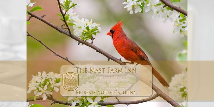 Lodging & Meeting | http://www.mastfarminn-retreats.com/lodging/retreat-lodging-meeting | You can select retreat lodging in one of our historic farmhouse rooms, new and restored historic cottages, or cabins. Lodging is included at special group rates in your retreat package.