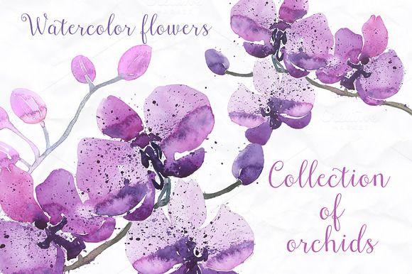 12 watercolor orchid by Spasibenko Art on @creativemarket