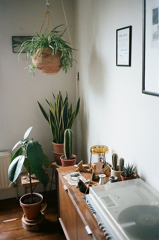 Flourishing plants in one corner of the room and a record player within arm's reach.