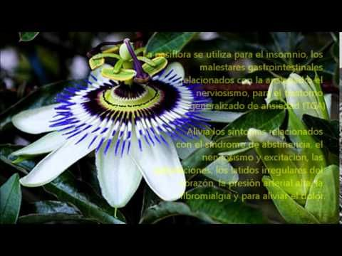 Ansioliticos Naturales, sedantes naturales, ansiolíticos y tranquilizant...