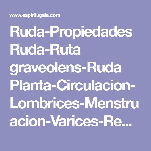 Ruda-Propiedades Ruda-Ruta graveolens-Ruda Planta-Circulacion-Lombrices-Menstruacion-Varices-Remedios naturales