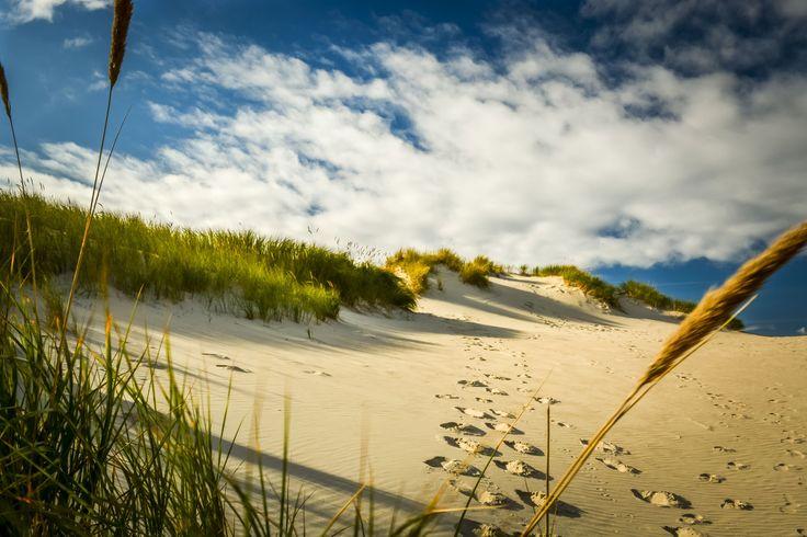 Norderney Dunes