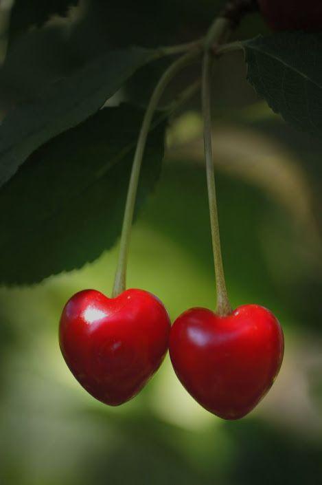 I <3 cherries