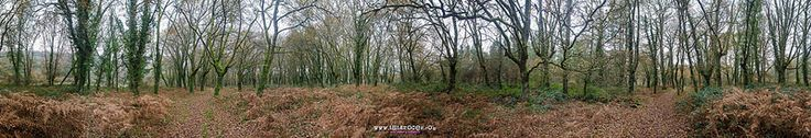 bosque da Fervenza, Lugo   © www.isidrocea.com