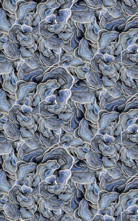 theleoisallinthemind:claire fischer   motif champignons d'arbre,...