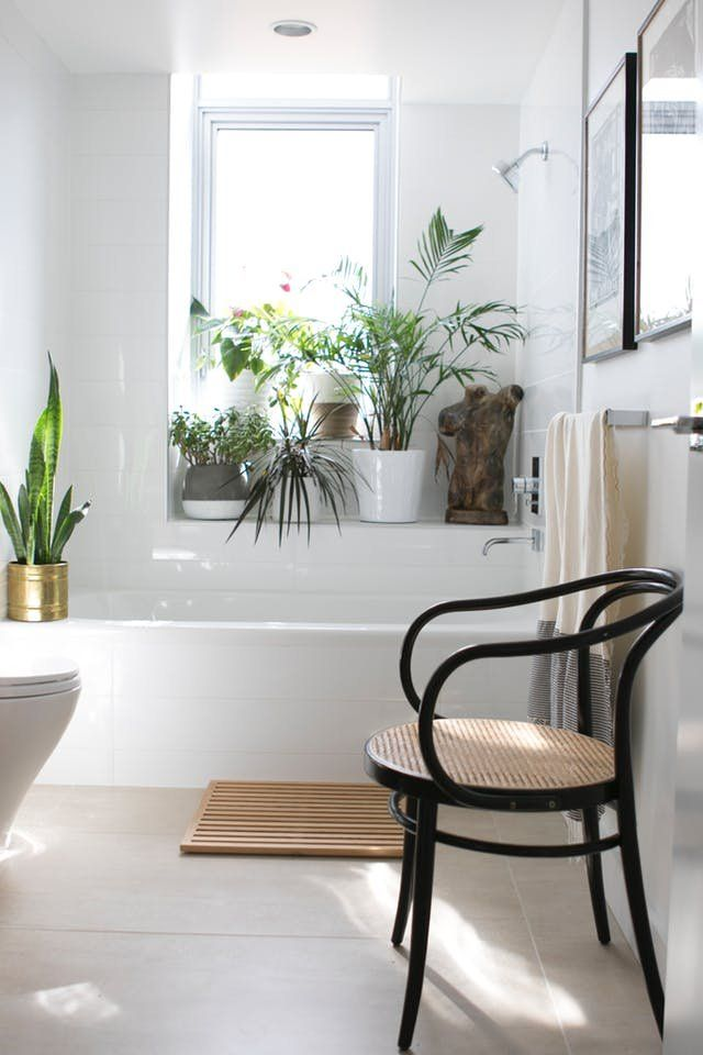 Pinterest's Most Popular Plant Placement Trend: Your Bathroom | Shower plants and hanging plants in the bathroom are trending for good reason. the humid air in most bathrooms can do the heavy lifting for you in terms of care and watering. The perfect low-maintenance alternative to fiddle leaf figs.