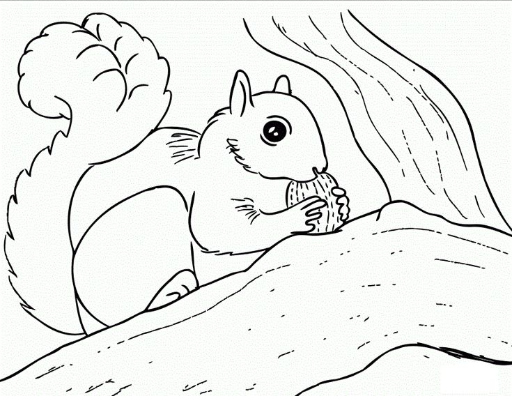 23 best images about herfst eekhoorn kleurplaten on for Coloring page of a squirrel