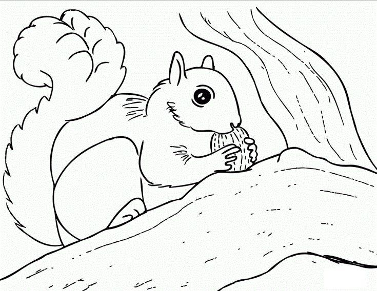 23 best * HERFST: eekhoorn kleurplaten! images on