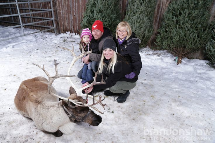2014 Reindeer 12 Visit Symons Valley Ranch.