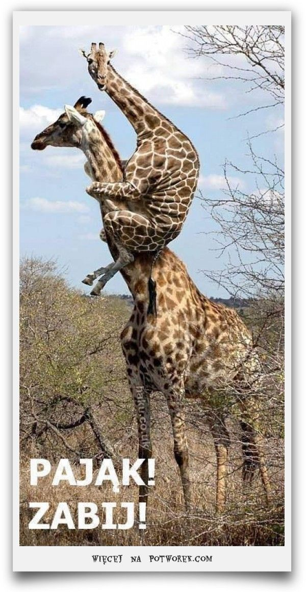 Śmieszne obrazki, zdjęcia, humor - Zwierzęta | Potworek.com