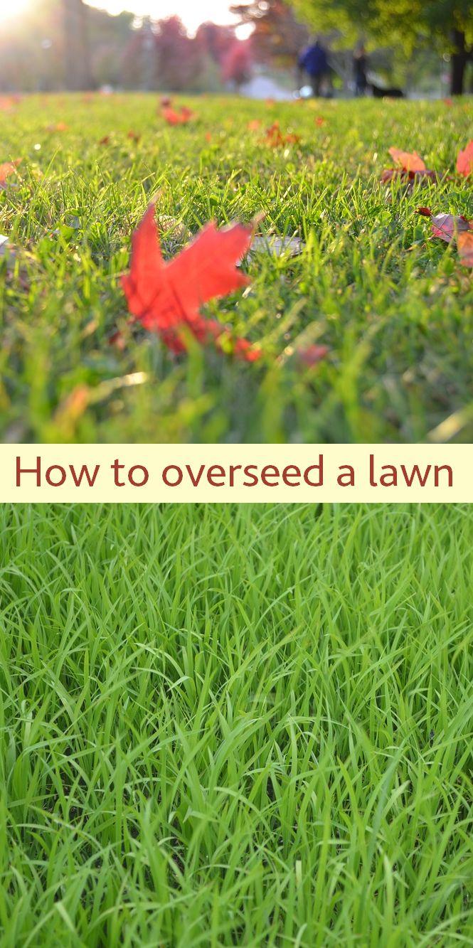 best lawn care images on pinterest backyard ideas garden ideas