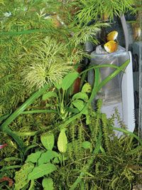 The new Sicce CO2 Life System is an excellent, simple-to-use method for adding carbon dioxide to a planted tank.