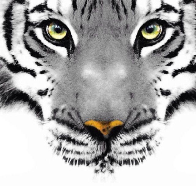 tumblr drawing tigre - Buscar con Google | tattoos ...