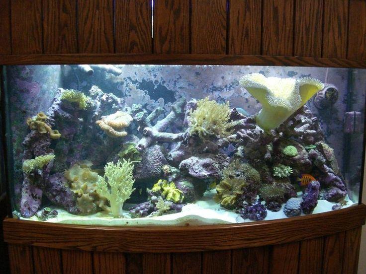 172 best fancy fish tanks images on pinterest