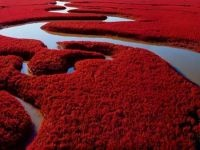 Chinese wetland has beachgoers seeing red: Red Photograpy, Favorite Color, Photograpy Nature, Chinese Wetland