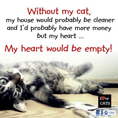 ...This describes my wee sable Burmese cat, Kitty Grumbles Dancie Paws who always knows when I feel blue and she is always there then to cuddle, purr and make me feel better. She is an amazing cat and I love her SO MUCH.