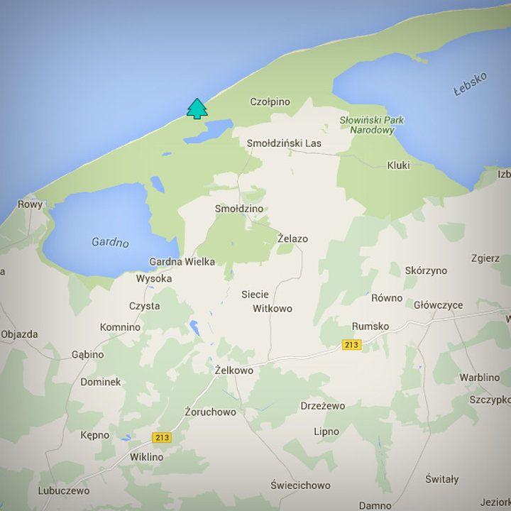 Zatopiony las koło Czołpina nad Bałtykiem