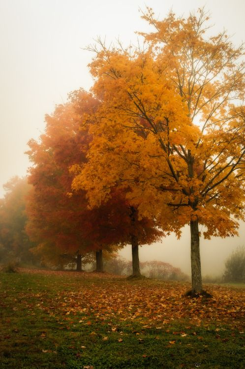 bookofoctober: Trees in the FogbySteven... | Autumn, Halloween, and Witchy Things.