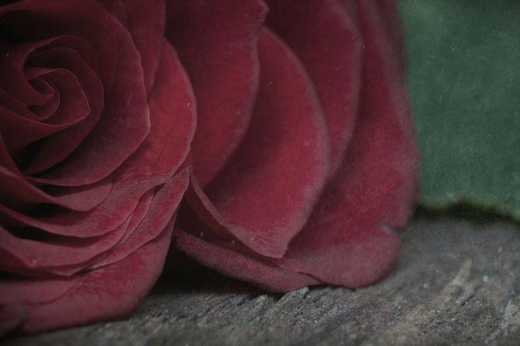 Rose by Angela van Lieshout on 500px