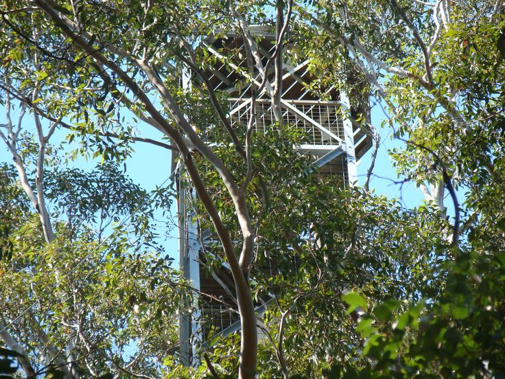 Gloucester Tree Lookout, Pemberton, Western Australia