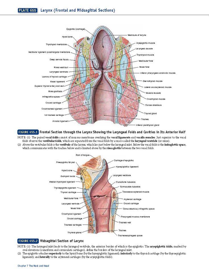 Nett Menschliche Anatomie Und Physiologie Marieb 9. Ausgabe Pdf ...