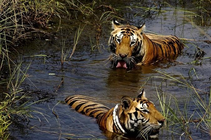 7-Day Wildlife Safaris in Central India from Jabalpur to Khajuraho Enjoy this 7-day tour, where you can explore the marble rocks of Jabalapur, take a boat ride on the river Narmada, enjoy thrilling safaris in Kanha and Bandhavgarh National Parks. Also visit the Temple of Goddess at Maihar and the beautiful 8th century temple complex at Khajuraho and enjoy a gala dinner in the lovely home of the former royal family of Ajaigarh.Day 1: JabalpurYou will be picked-up Jabalpur at 7:...