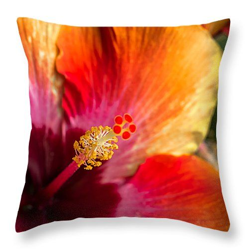 "Colorful Throw Pillow 14"" x 14"""