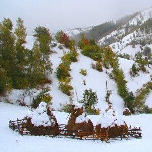 Winter and haystacks