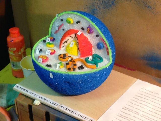 3d plant cell model styrofoam ball - Google Search