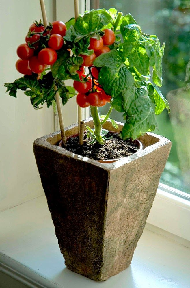 How to Choose Plants for Container Gardening. Every plant doesn't give similar yield.