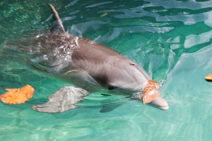 Visit dolphin encounters in Freeport Bahamas