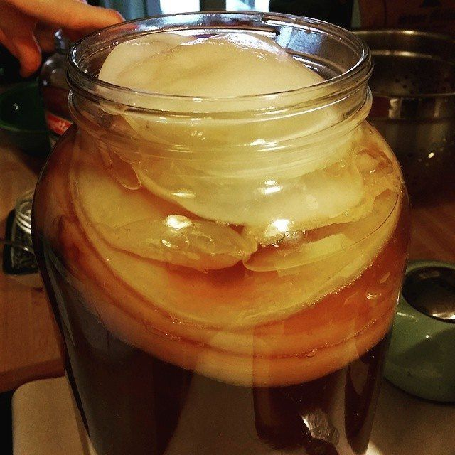 How to create (and maintain) a Kombucha SCOBY hotel