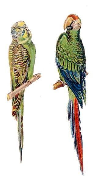 Victorian Era Budgie and Parrot | Ephemera | Pinterest