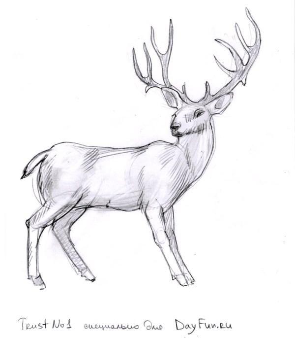 Северный олень как нарисовать картинки