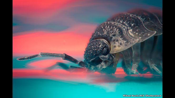 Fotógrafo Mikael Buck colheu imagens aumentadas de pequenas criaturas que espreitam os lares europeus durante o inverno.