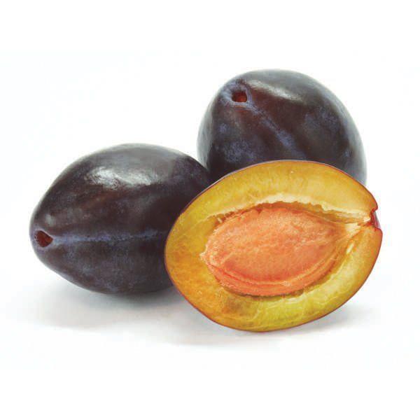 Śliwa - Prunus domestica 'Węgierka Dąbrowicka'