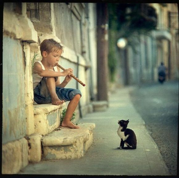 best audience ever.: Cats, Flute, Boys Plays, Cool Pictures, Kittens, Kitty, So Sweet, Little Boys, Animal
