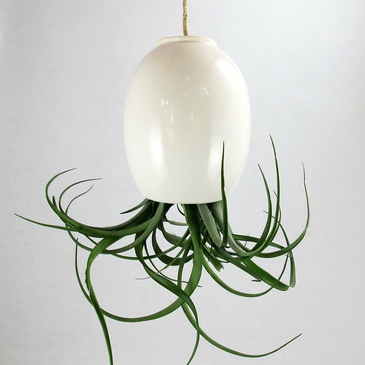 Best 25 hanging air plants ideas on pinterest airplant for Air plant holder ideas