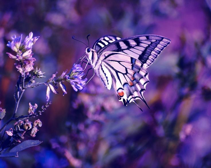 Transmutation..... à la recherche de la paix intérieure ..... ( 4 ) - Page 14 F0fd65781c2bdf0d04e4090220d76c88