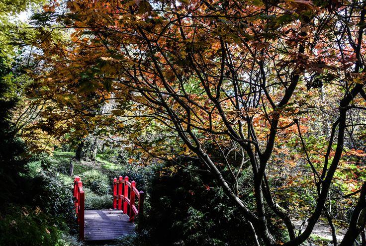 Les 44 meilleures images propos de mont de marsan sur for Entretien jardin mont de marsan