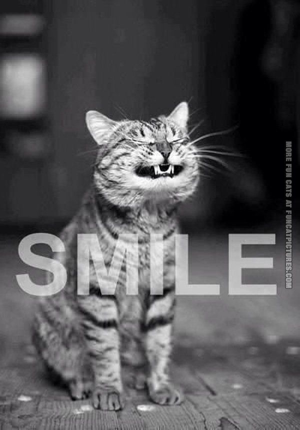 Funny Cat Pictures | Smiling cat