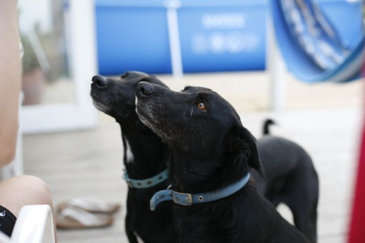 Curacao: laiva on lastattu eläimillä...