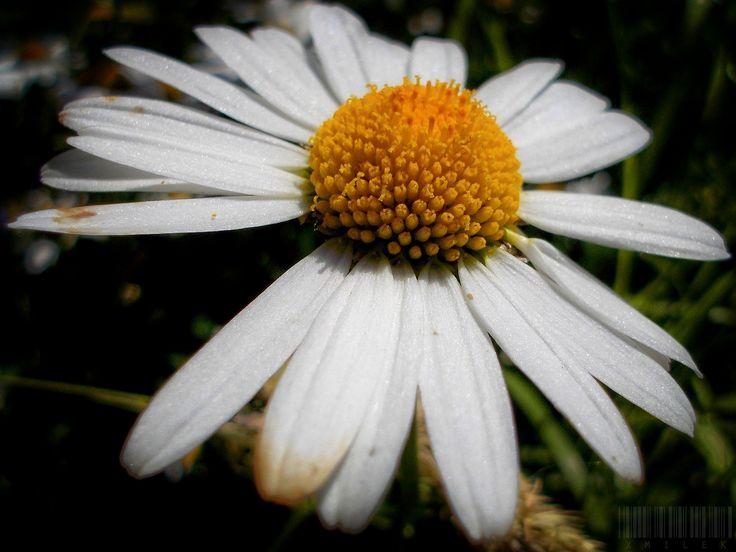 Glittering by xmilek.deviantart.com on @deviantART