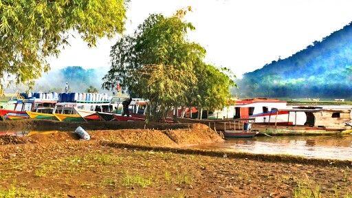 Bamboo & boat