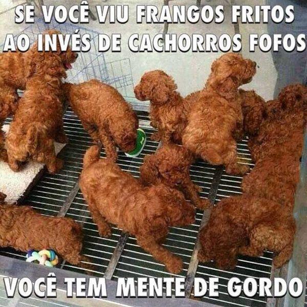 Eu vi cachorros fofos fritos a óleo como se fossem galinhas... Isso que dizer que eu sou louco?