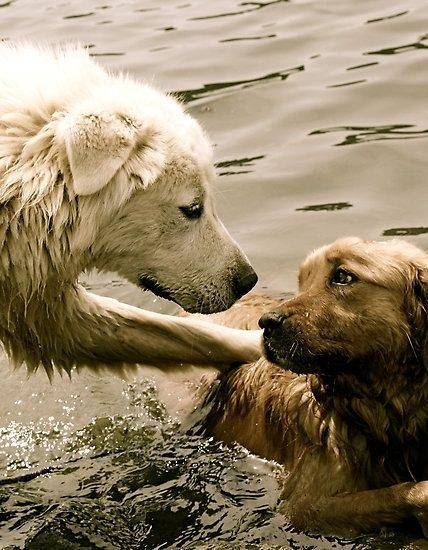 This picture is so sweet. Just checking in, dog to dog. The beach can really take it out of you. Who can say they feel no compassion? Not.