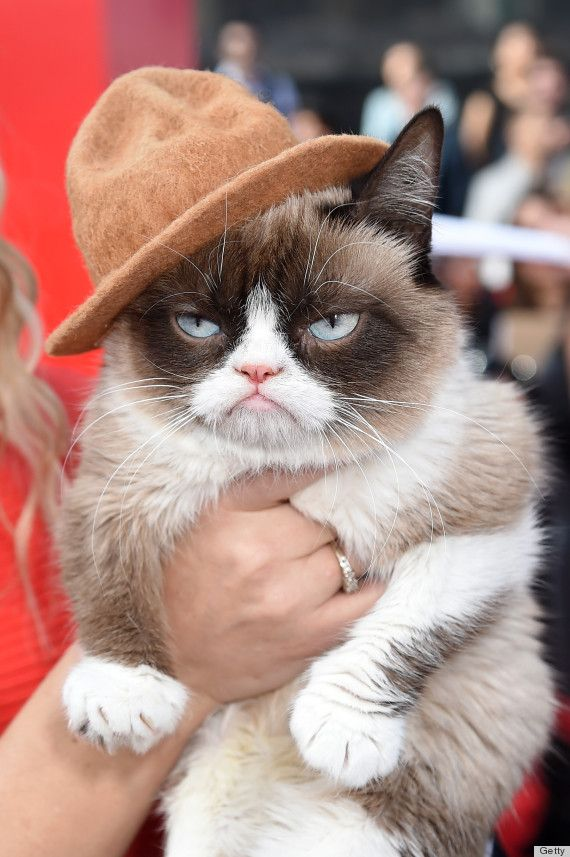 Grumpy Cat <3 <3 <3