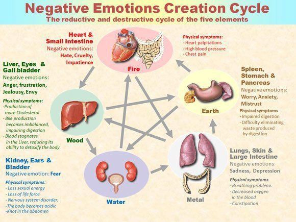 NegativeEmotions harm your overall wellness and health. The organ system can be…
