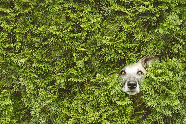 Hundefotograf Hundefotografie Agility Fotos Hundefotos Hundeschule Hundesportfotografie deutschlandweit Elke Vogelsang Hildesheim Hannover Braunschweig