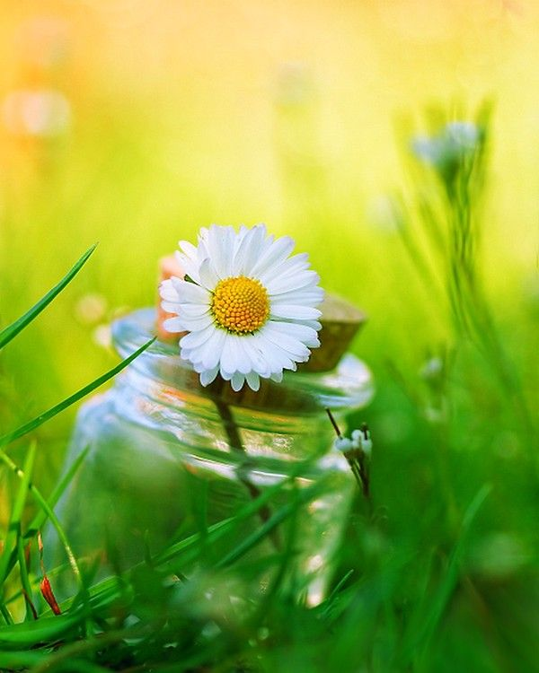 Image Result For Best Whatsapp Nature Dp Happy Flowers Daisy Love Love Flowers